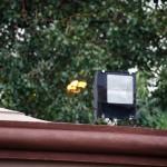 Sigma 18-300mm sample image